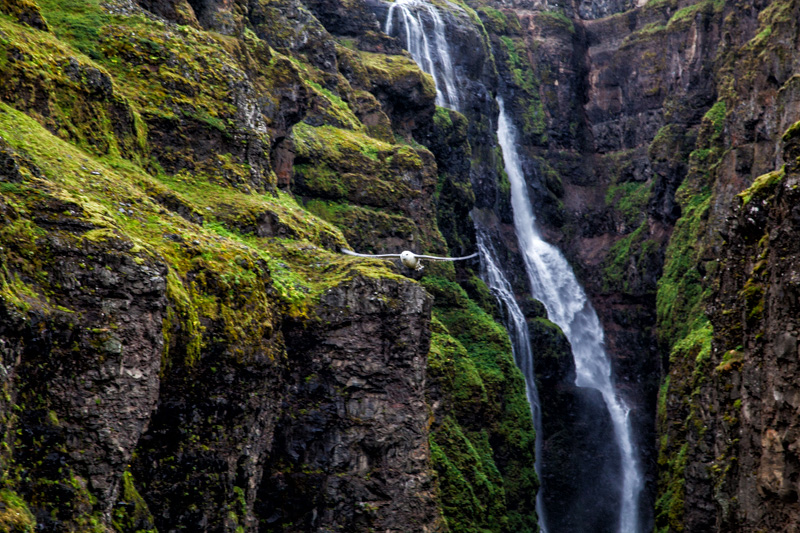 Möwe beim Glymur Wasserfall