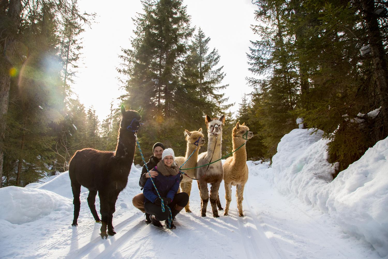 Winter - Olympiaregion Seefeld
