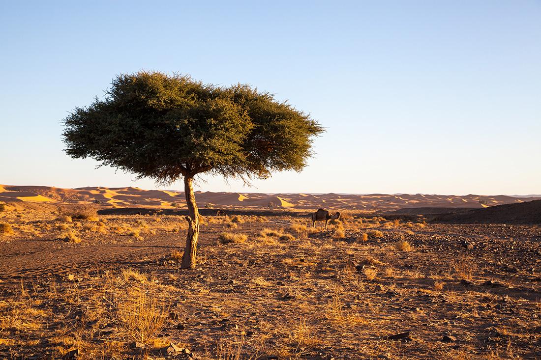Wüstentour Marokko